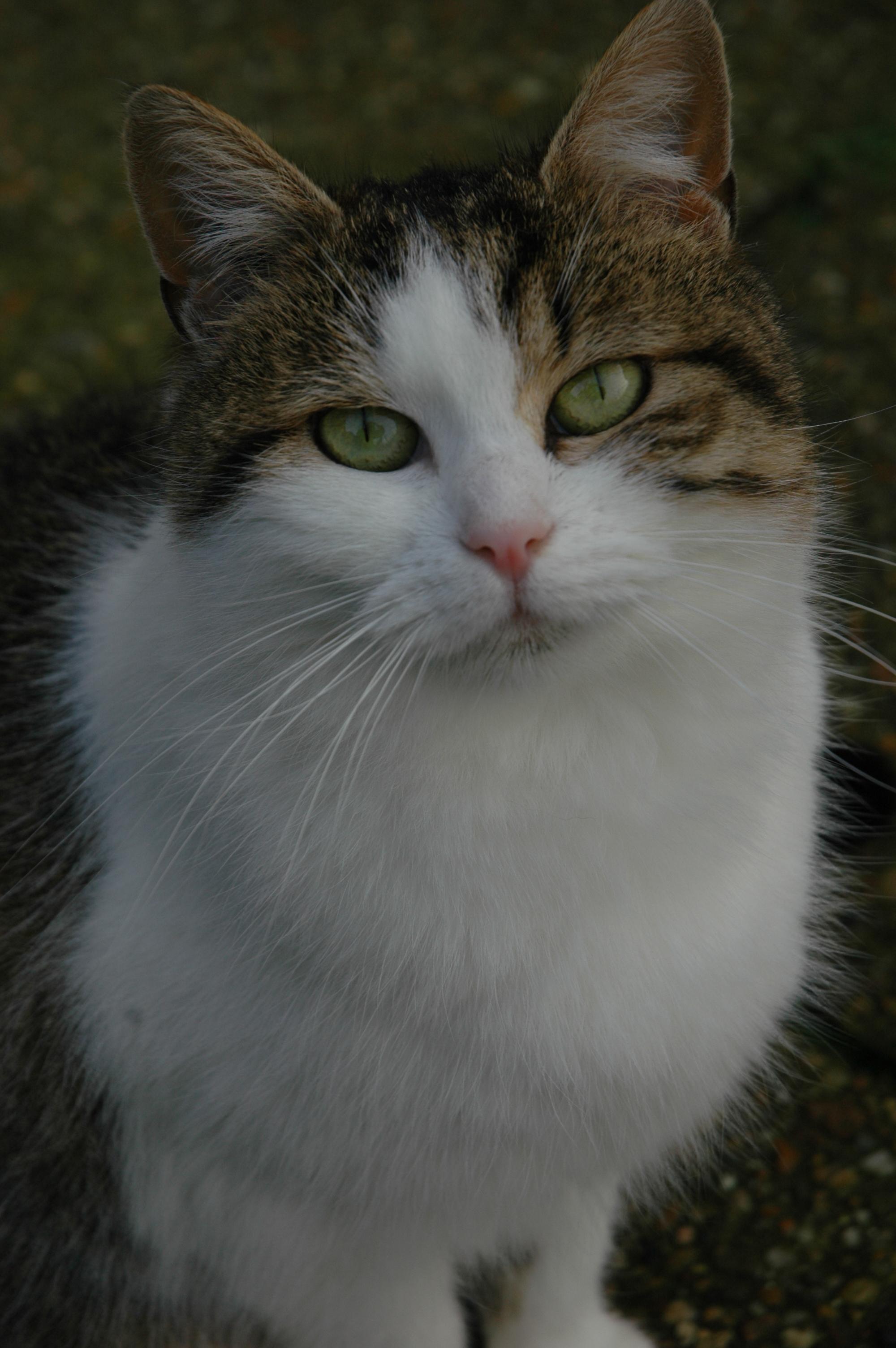 Giroflée (16)