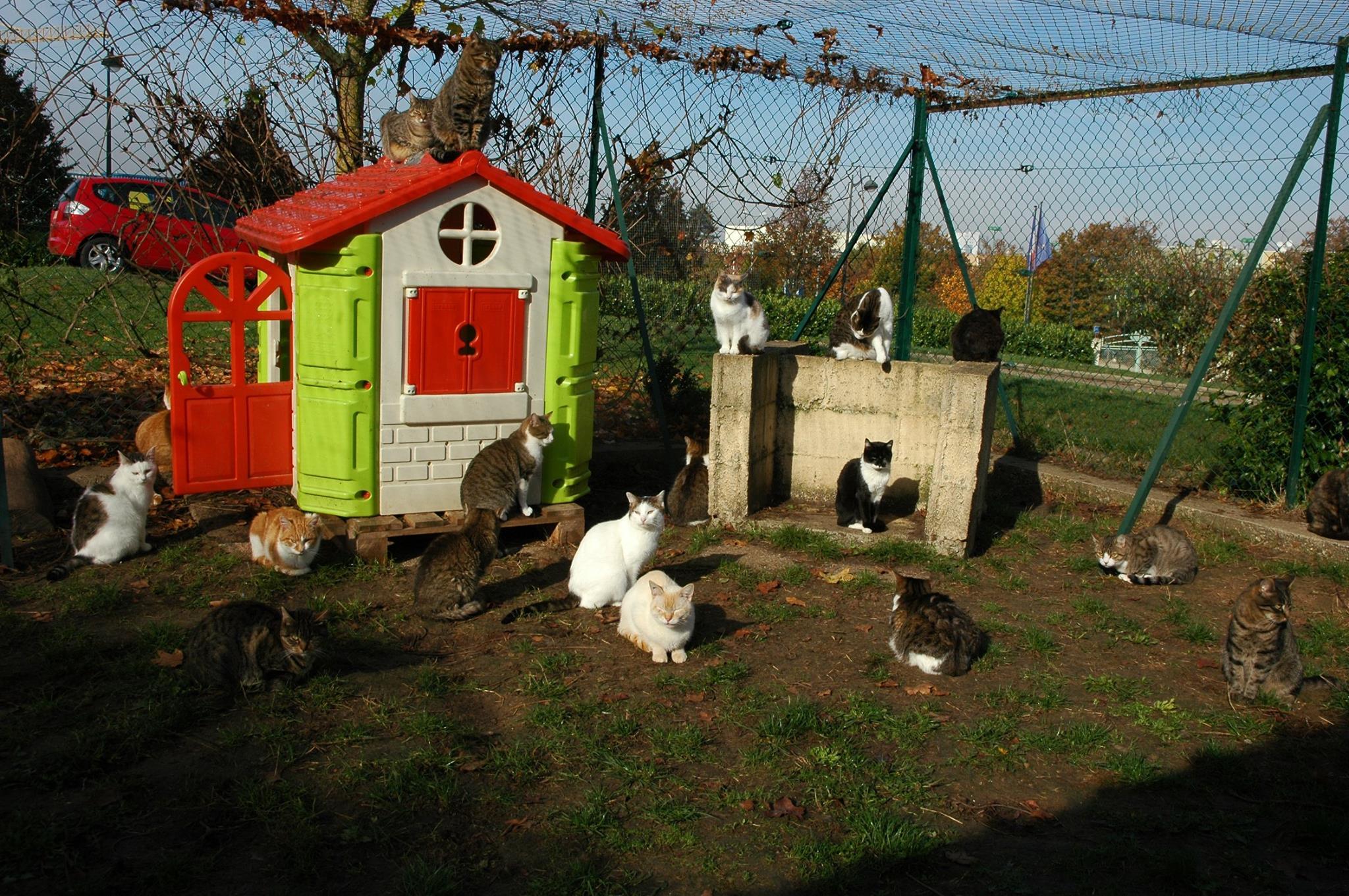 chats du cipam – fin oct 16