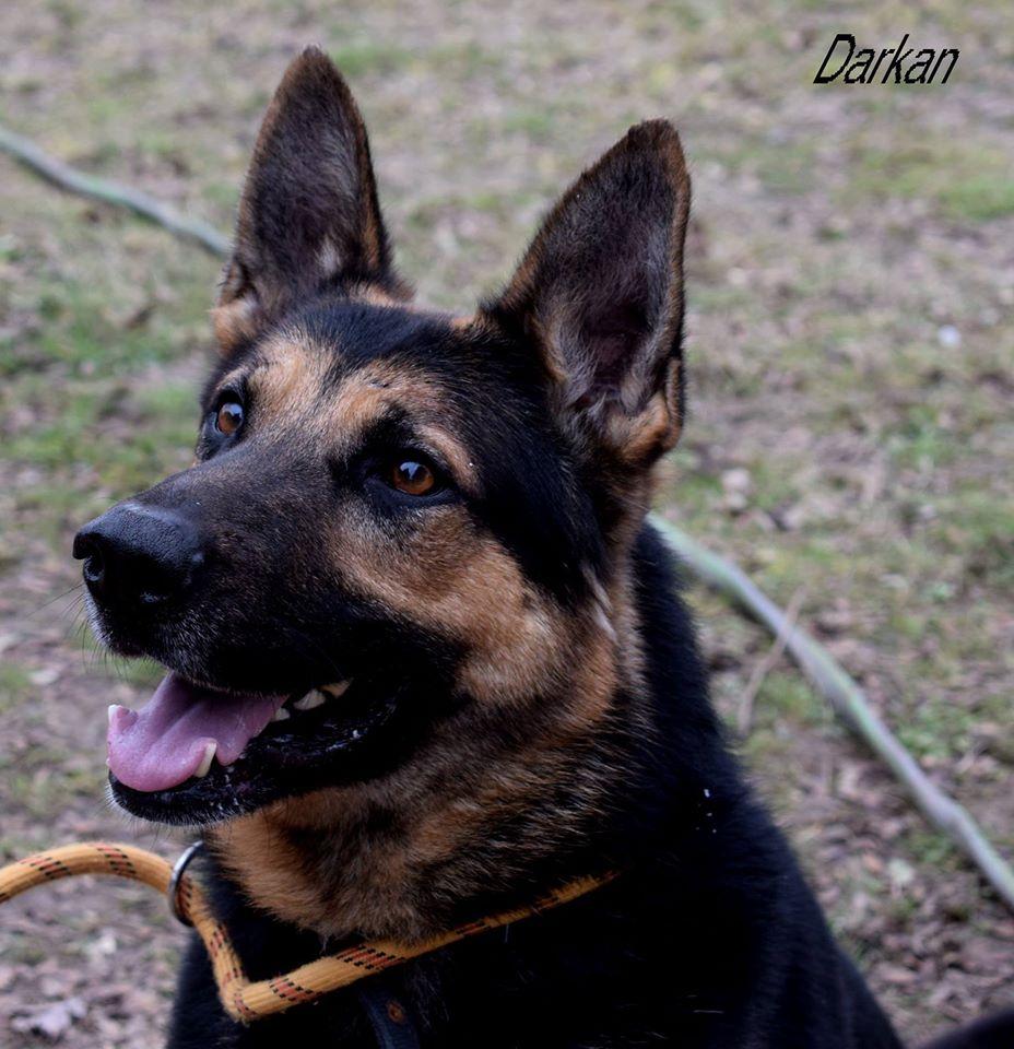 darkan3