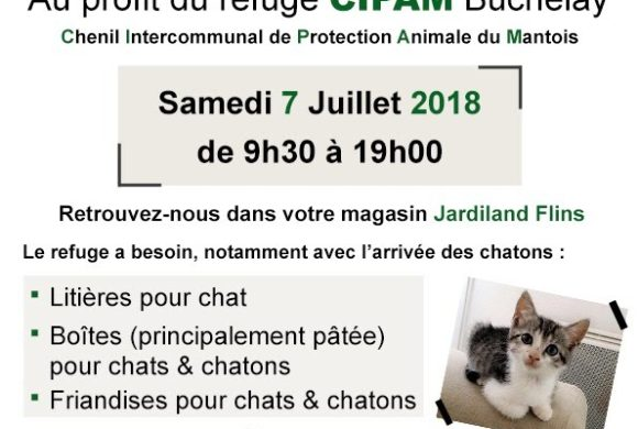 chat saint germain en laye