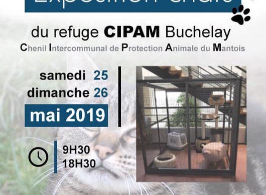 Exposition chats 25 et 26 mai 2019, TRUFFAUT, Buchelay