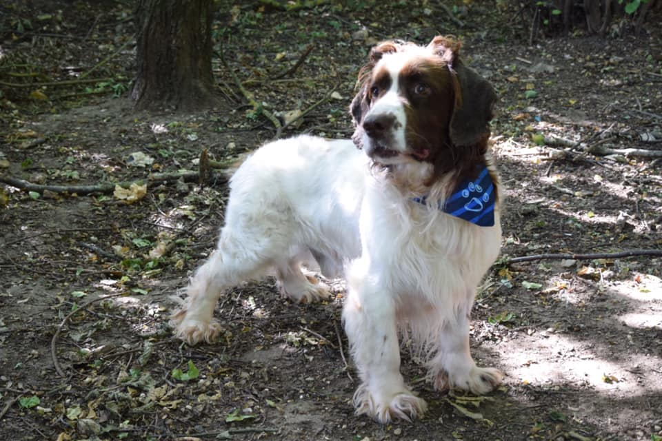 Ernest (4)