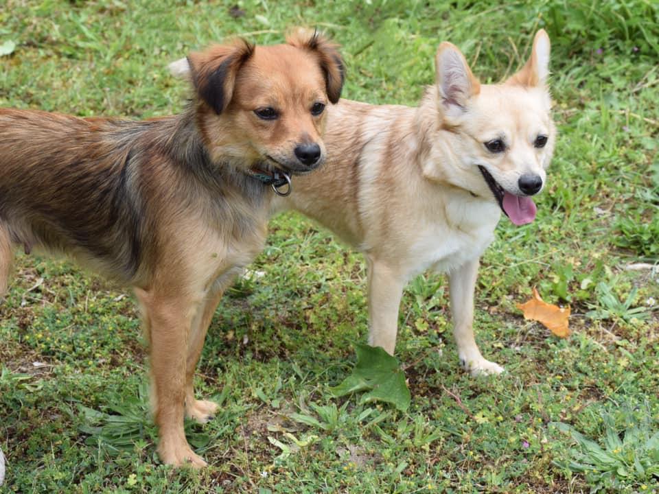 Mina et Maïa (1)