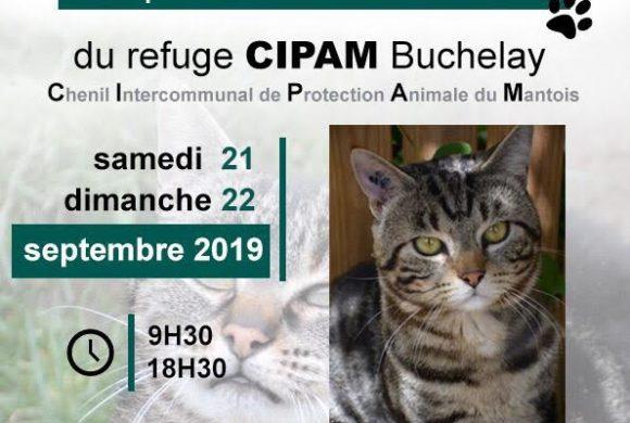 Exposition chats et collecte 21 et 22 septembre 2019, Truffaut Buchelay