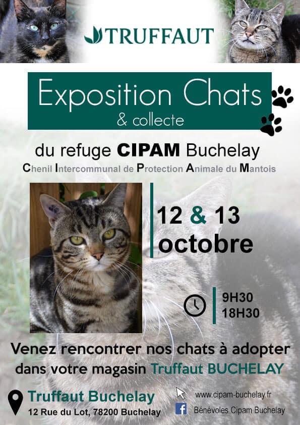 Exposition chats et collecte les 12 et 13 octobre 2019, Truffaut Buchelay