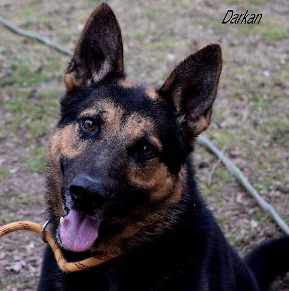 darkan2