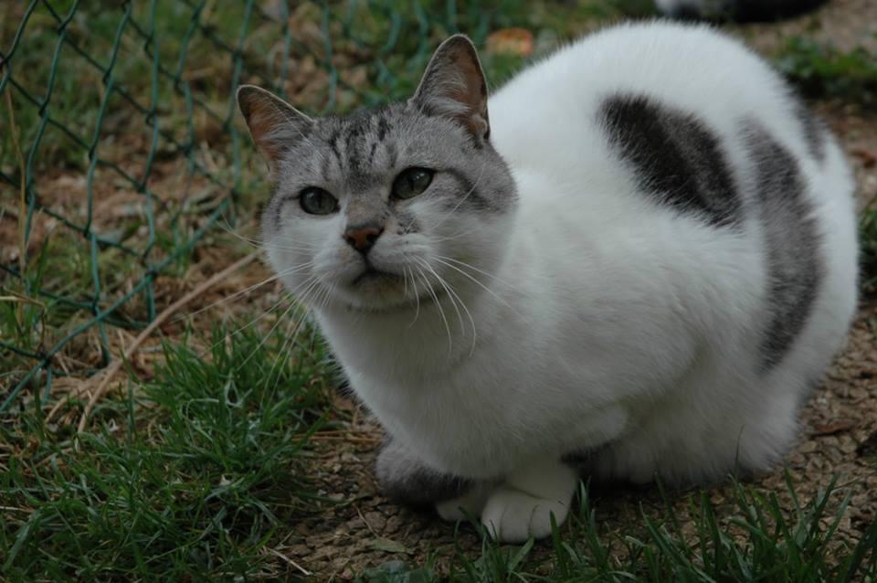 mistigriff chat cipam