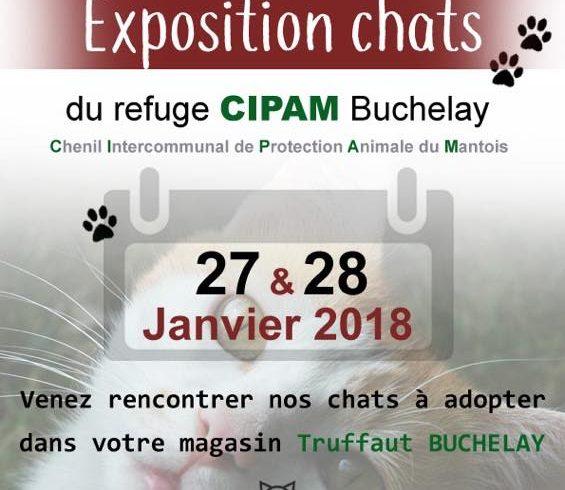 Exposition des chats à adopter à Truffaut Buchelay les 27 et 28 janvier