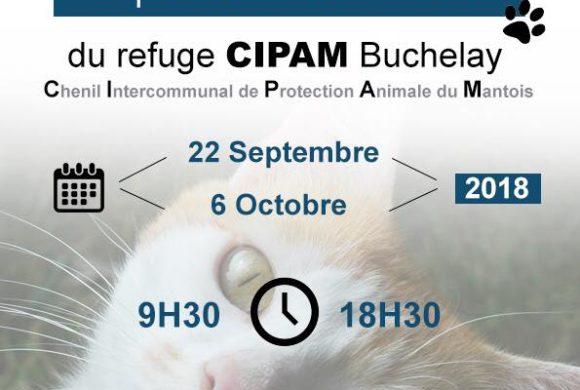 Exposition des chats à adopter à Truffaut Buchelay le 22 septembre et le 6 octobre
